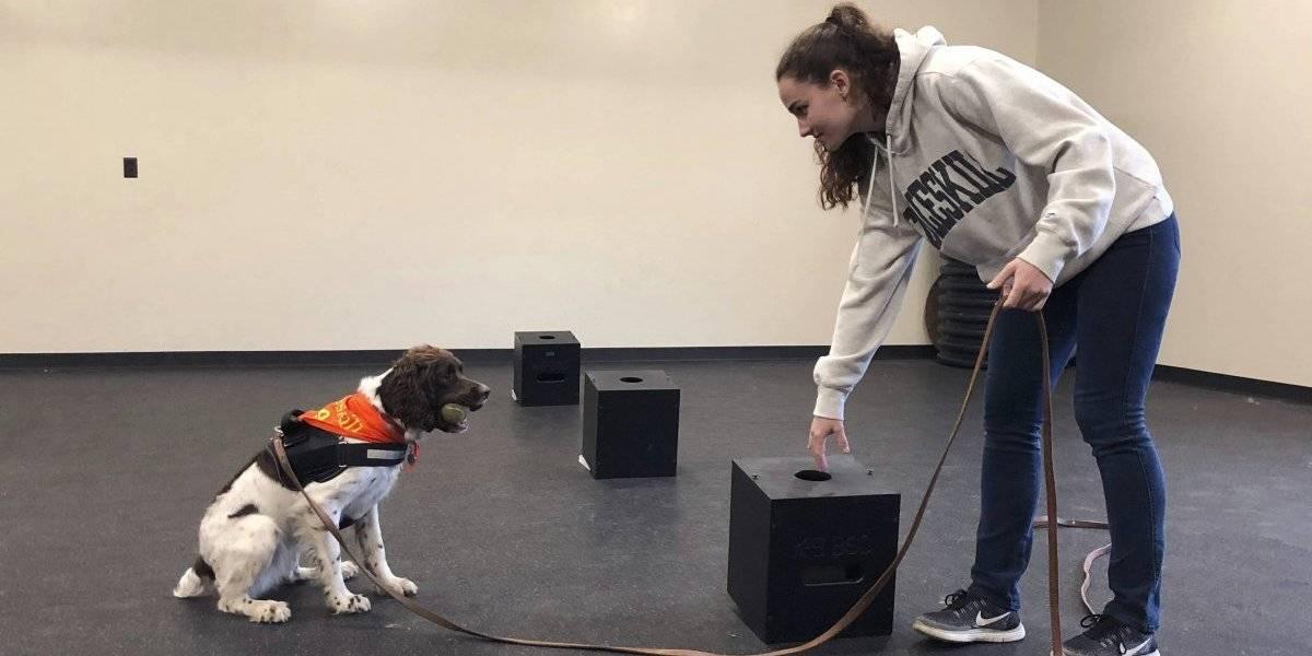 La primera licenciatura para entrenar perros está en NY