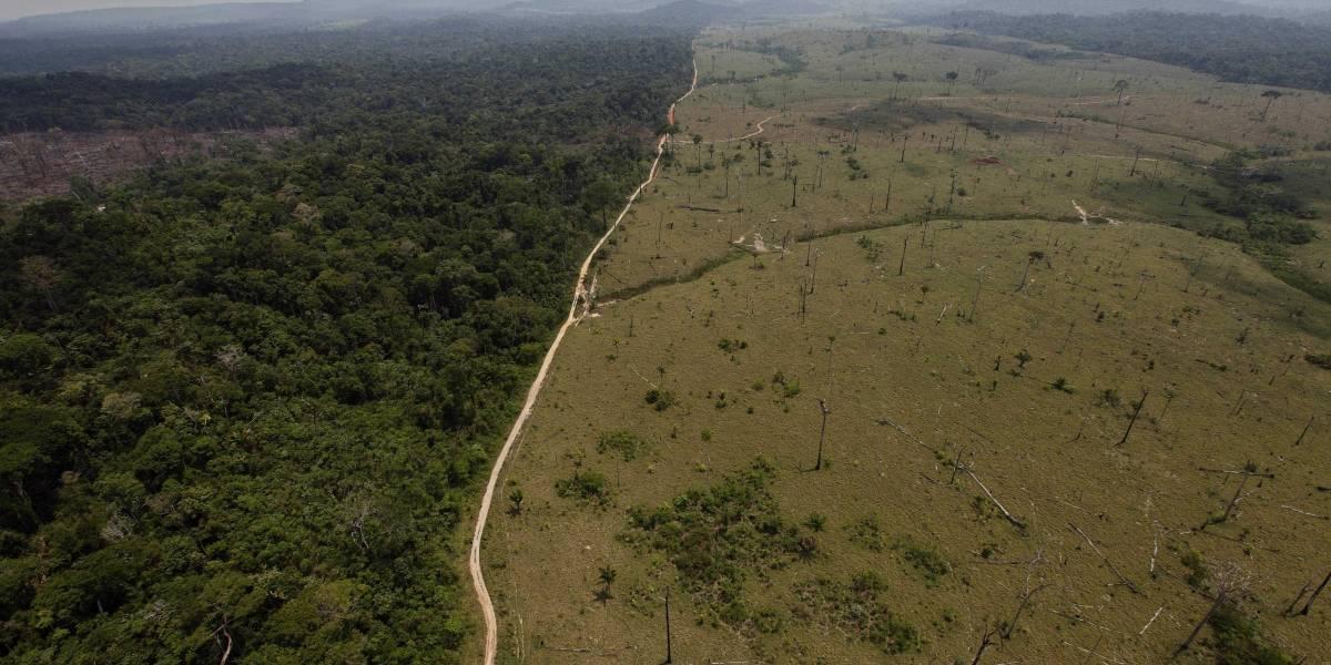 Aumenta la deforestación en la Amazonía de Brasil
