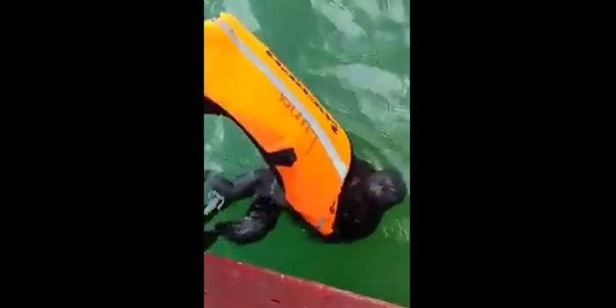 VIDEO. Mono aullador es salvado de ahogarse en el lago Petén Itzá