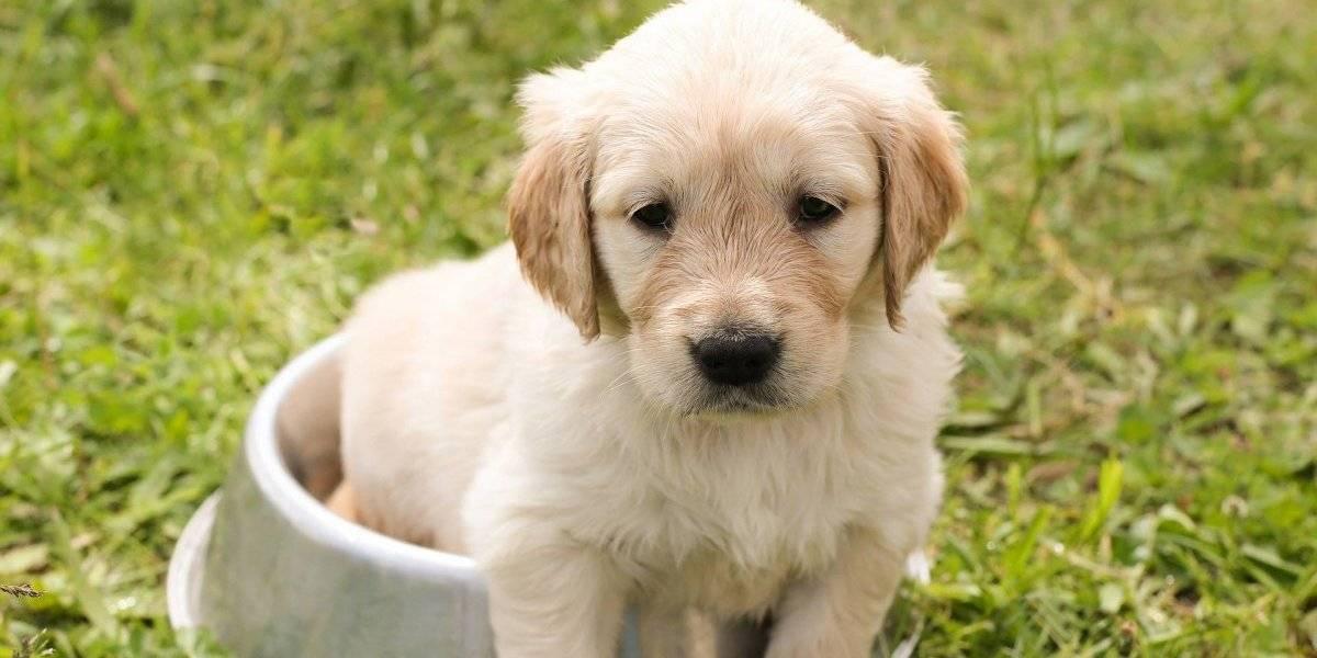 Dieta do pet: estes 8 alimentos humanos são proibidos para dar ao seu cachorro