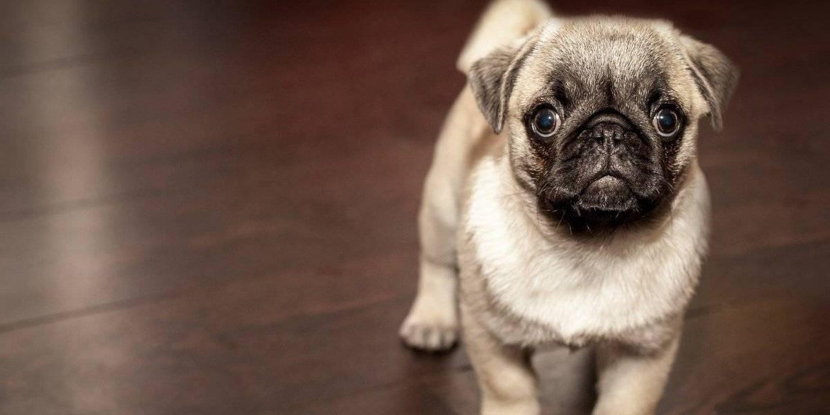Estes são os nomes de cachorro mais populares no Brasil, segundo o Censo Canino