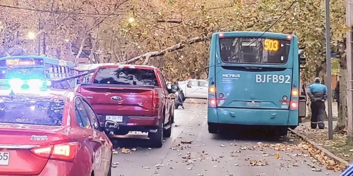 Fuertes ráfagas de viento y lluvia afectan Santiago: Ramas obstaculizan las calles y se registran cortes de energía