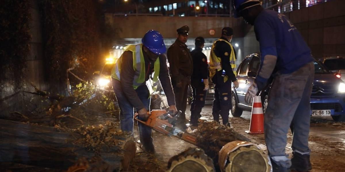 650 árboles caídos complicaron sistema eléctrico: Intendencia RM suspendió clases en colegios municipales de Til Til