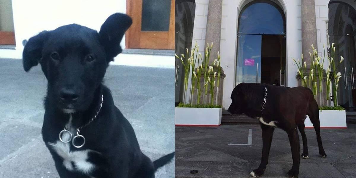 La carta de Chester con la que el Municipio de Quito crea conciencia del maltrato animal