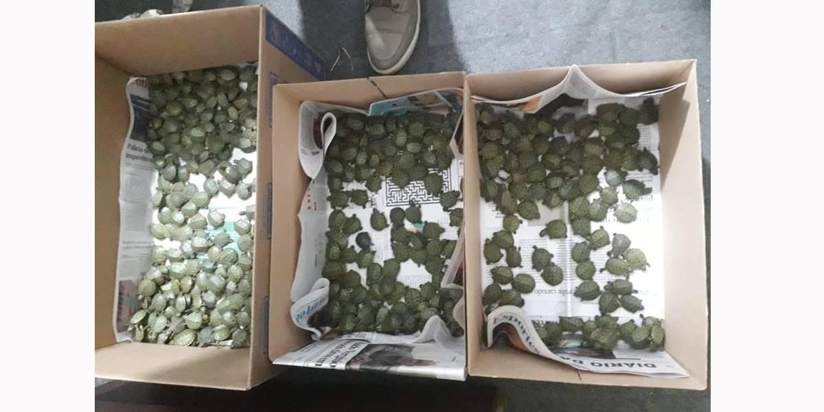 Homem é preso transportando 400 tartarugas na bagagem