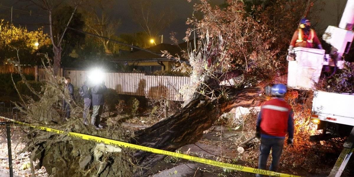 Especies muertas, secas y mal podadas: las razones de por qué 650 árboles se vinieron abajo en Santiago