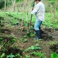 The Jari´s Farm