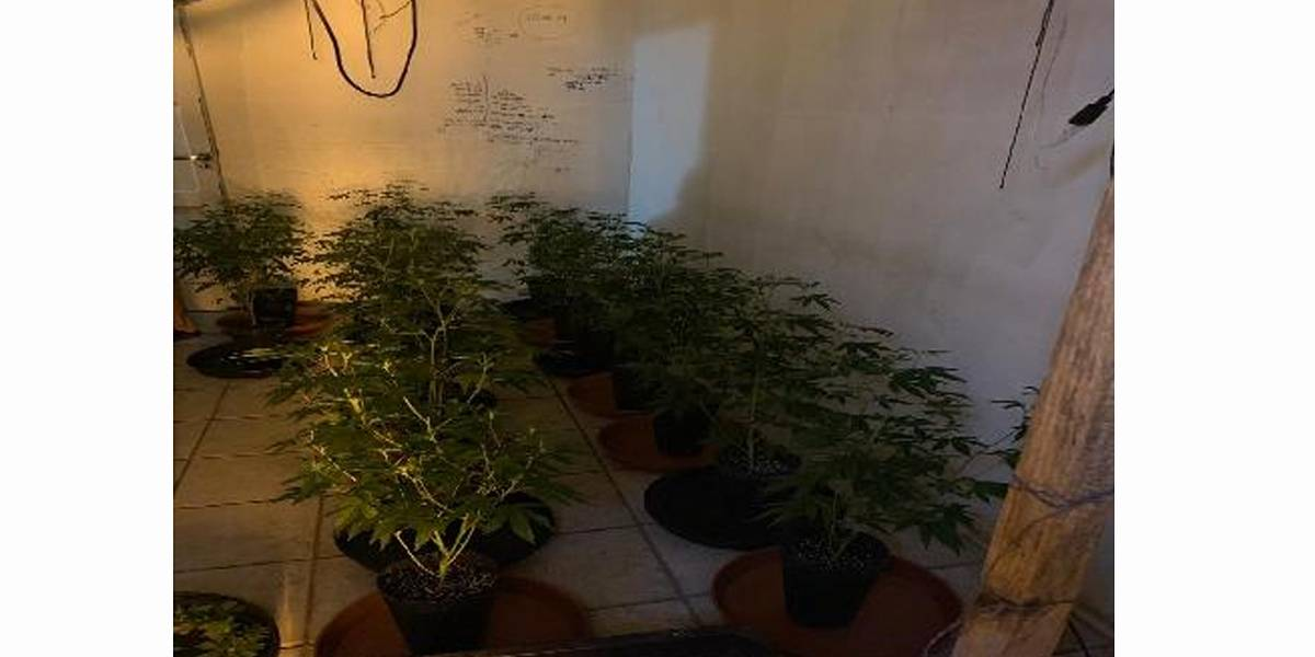 Americano plantava maconha em apartamento em Ipanema