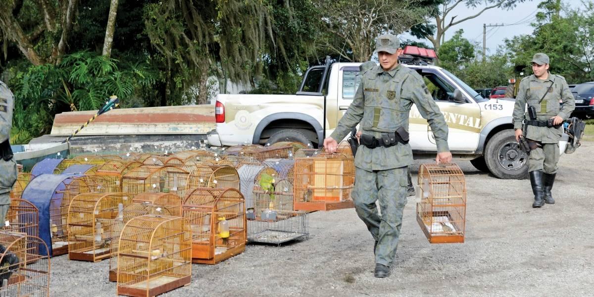 São Bernardo resgata média de quatro pássaros por dia