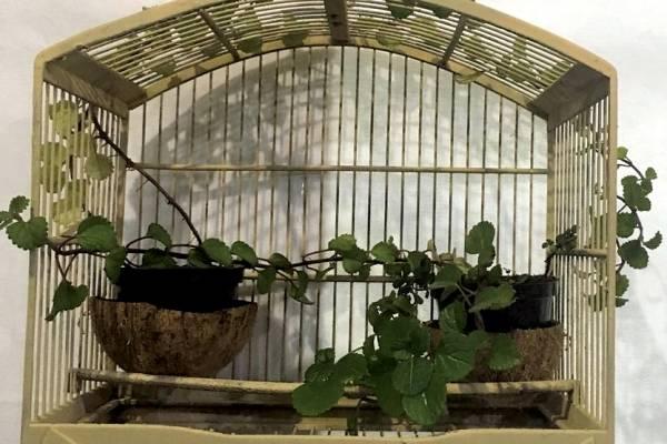 Gaiola foi transformada em suporte para plantas em projeto