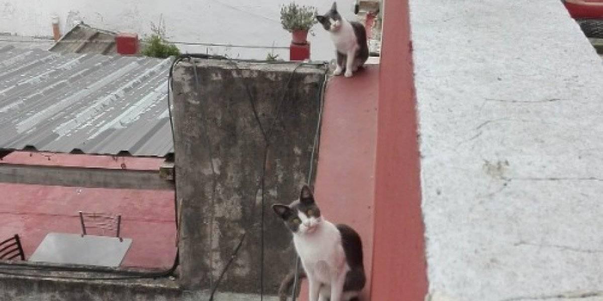 """""""Copy paste gatuno"""": la particular foto de dos gatitos que enloqueció a Internet"""