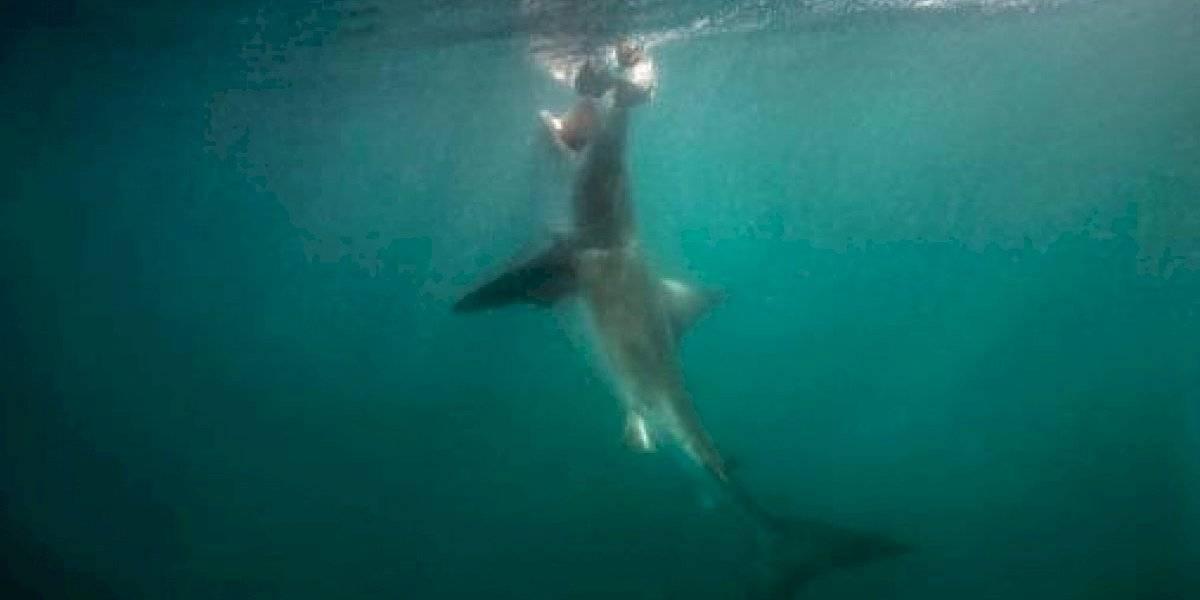 Muere surfista atacado por tiburón en California