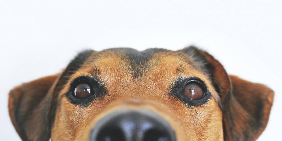 Presentan legislación por petición que hace viable servicios veterinarios masivos