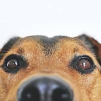 7 recomendaciones para proteger a tu mascota de la pirotecnia