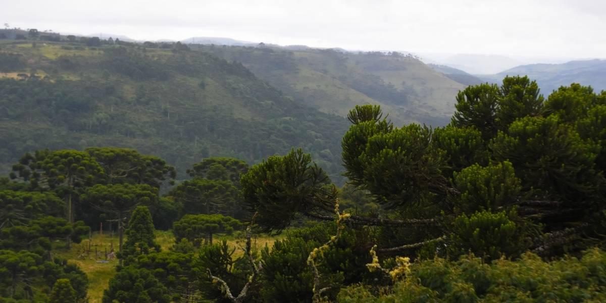 Às vésperas do inverno, Santa Catarina registra temperatura abaixo de zero