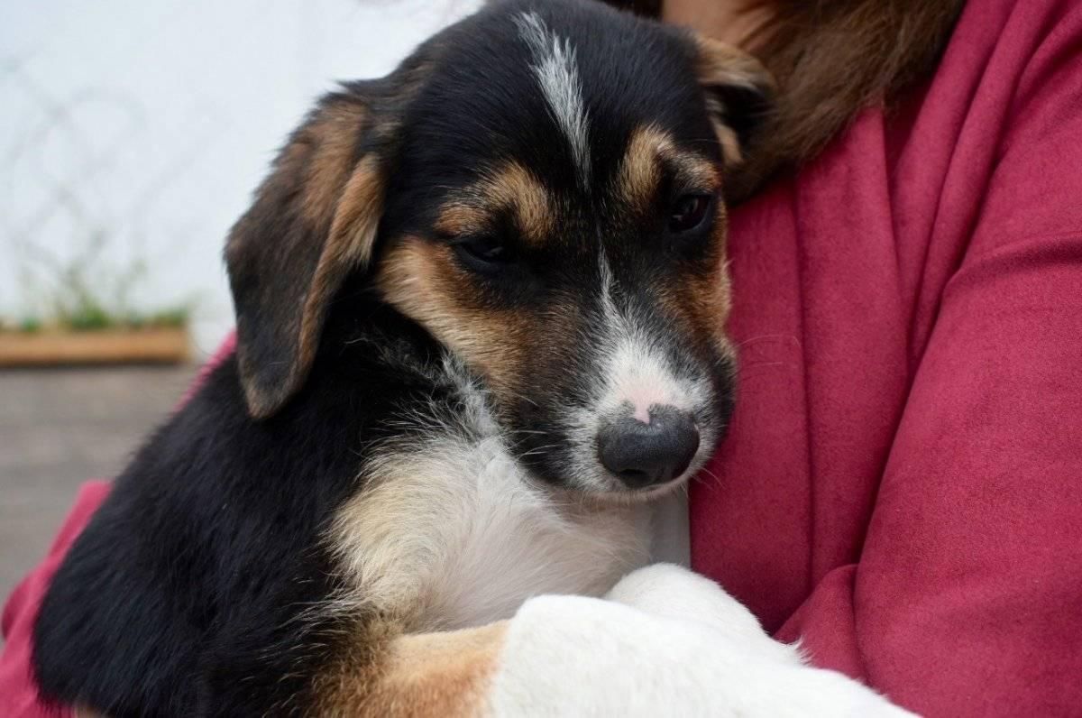 #ChesterVive: Instituciones municipales de Quito se unen a la adopción de perros