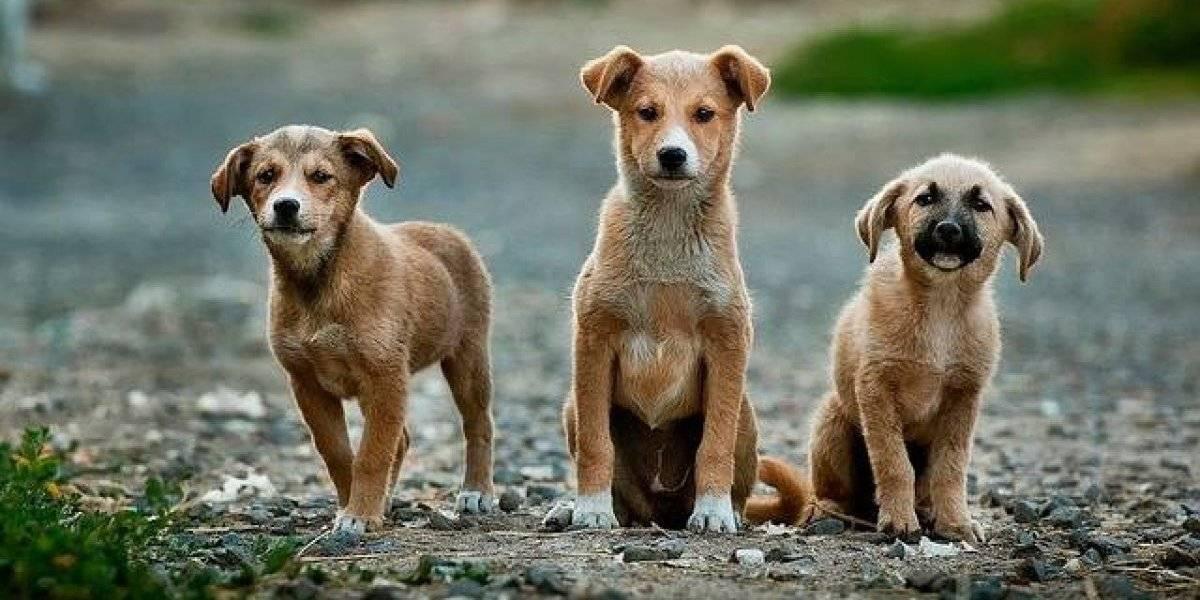 Idade do Pet: como saber quantos anos humanos tem o seu cachorro