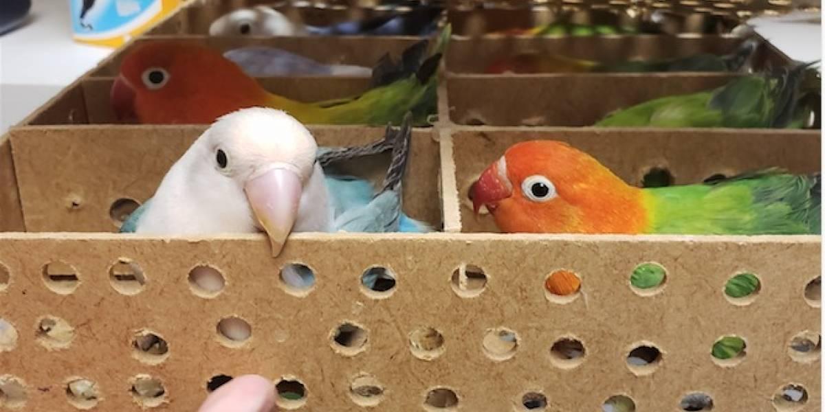 Roban sobre 57 aves de una residencia en Orocovis