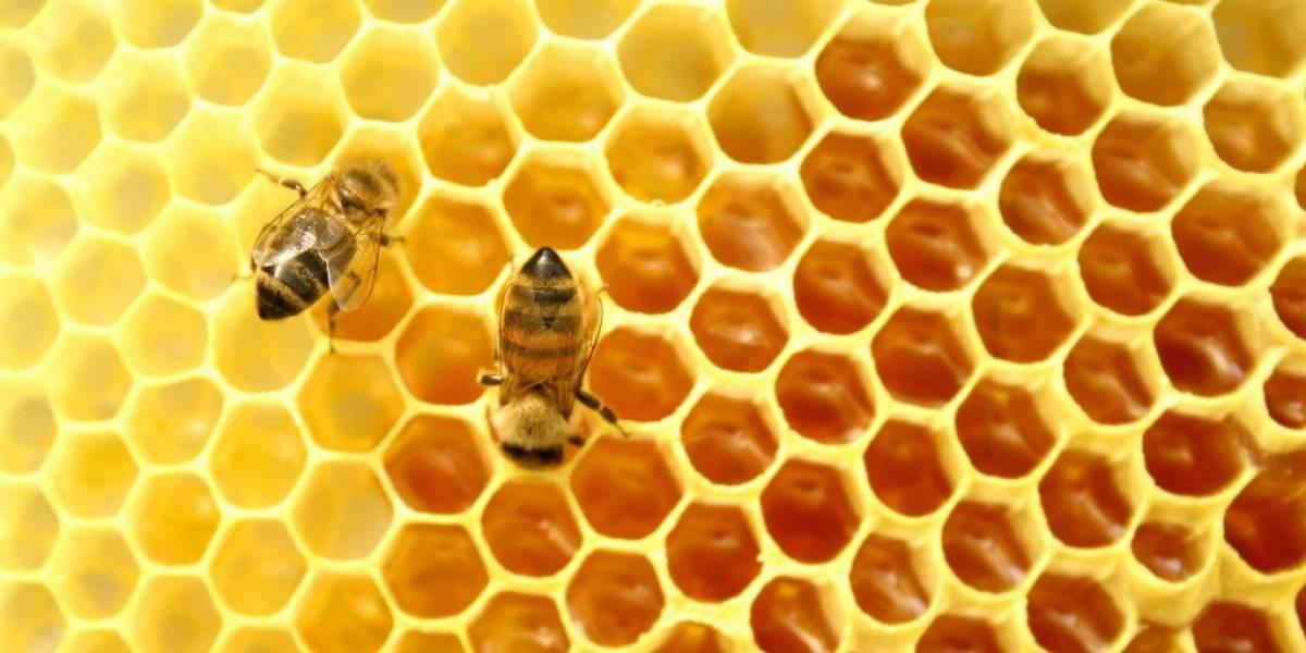 Científicos mexicanos crean parche de miel para evitar amputaciones de pie diabético