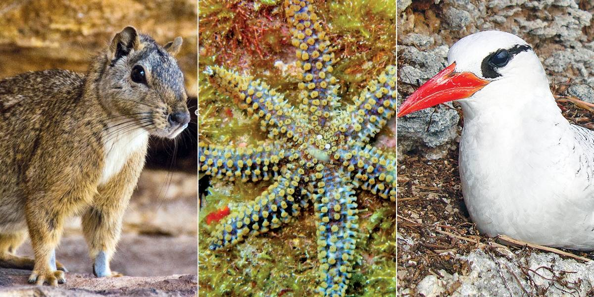 Em 10 anos, 716 espécies entraram na lista de extinção no Brasil
