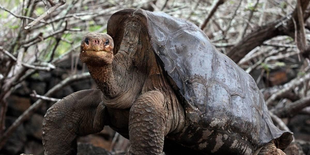 5 animales que se extinguieron en los últimos años