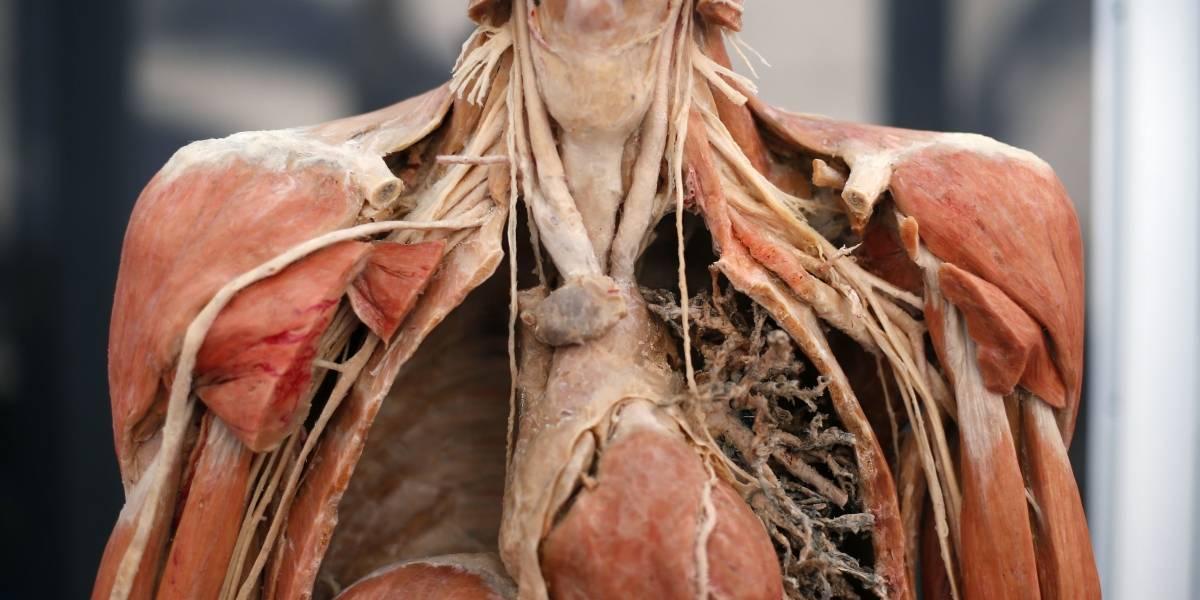 'Bodies', la exposición que descubre los secretos del cuerpo humano