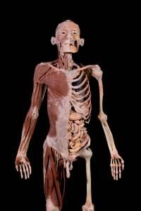 bodiesfull6-55bd357b81acc471578f7f92855a9a2f.jpg
