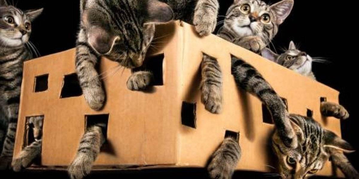 Finalmente sabremos que pasó con el gato de Schrödinger: después de 84 años científicos descubren la clave para resolver uno de los más grandes misterios de la física