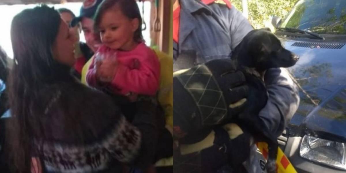 Criança desaparecida é encontrada em estrada ao lado do cachorro da família em Santa Catarina