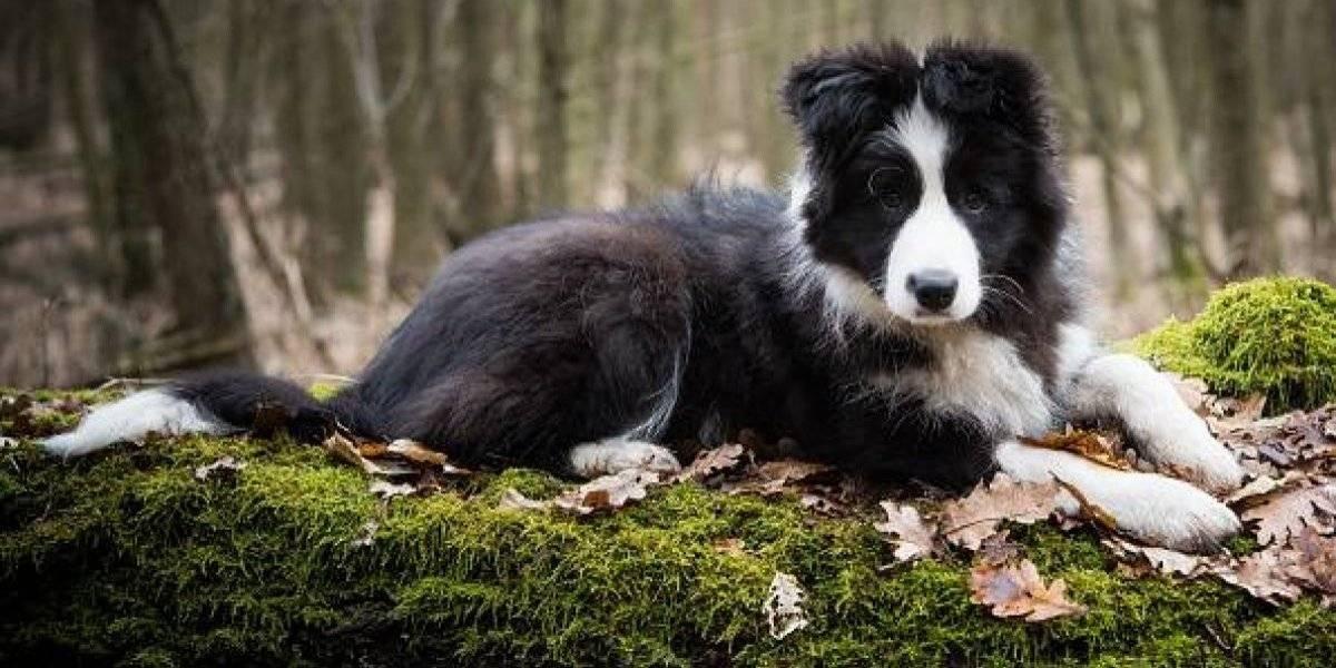 Confirman que los perritos se contagian del estrés de sus dueños