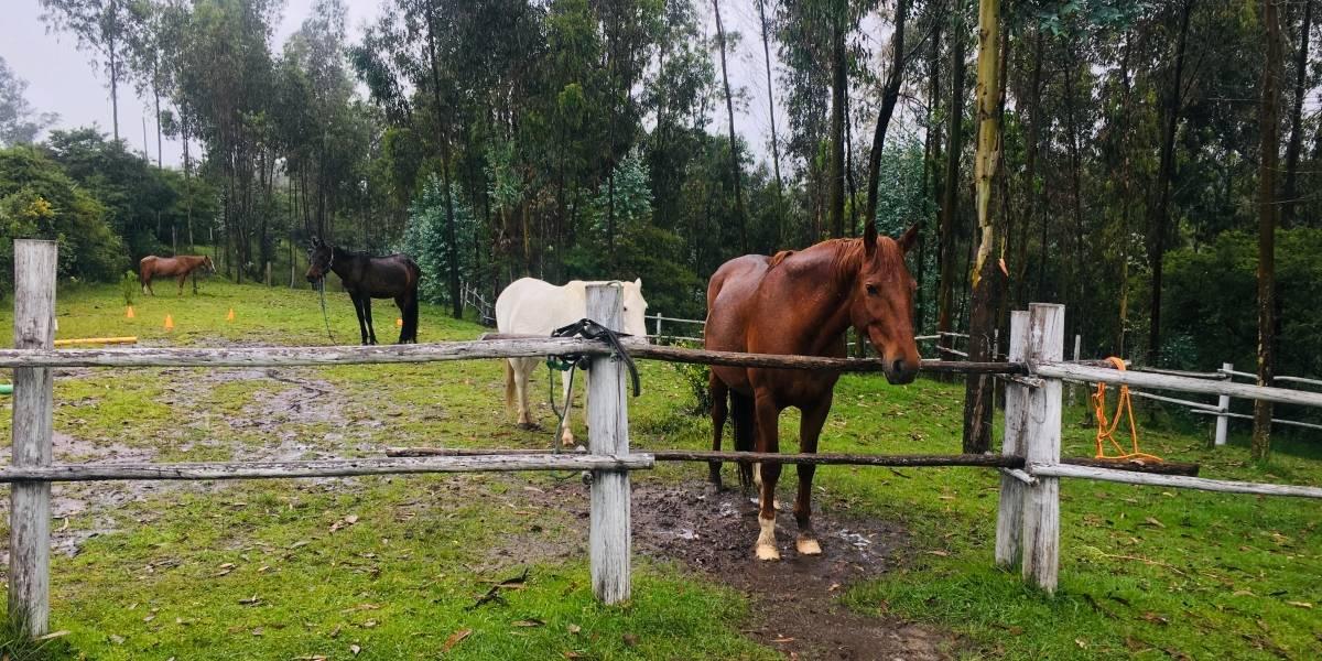 La energía de los caballos, solución para problemas de los seres humanos