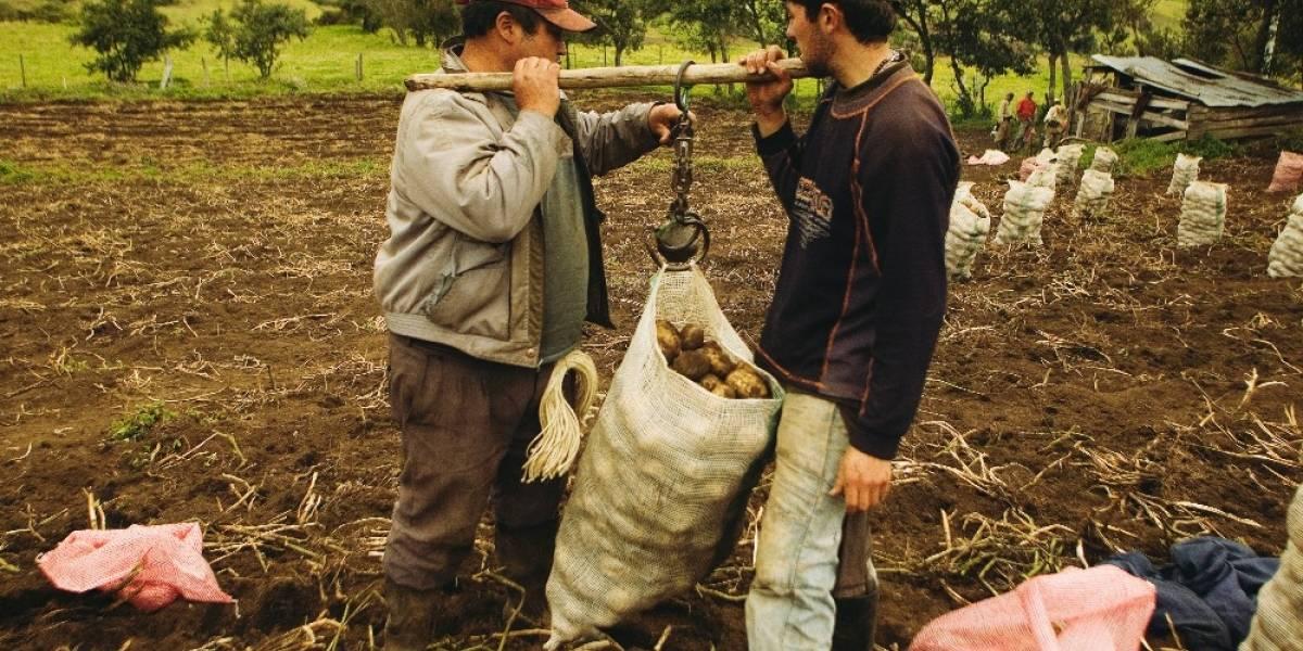 Del campo a la mesa: los depredadores de la cadena alimentaria