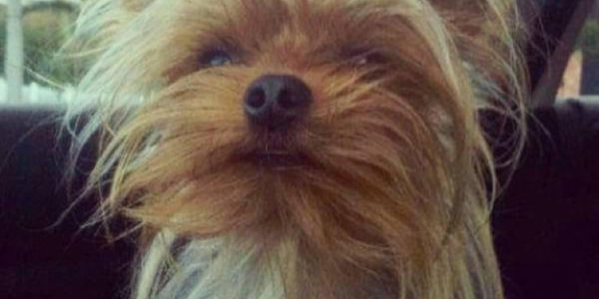 ¿Qué ha pasado con el hombre que asesinó a patadas a una perrita yorkie en el norte de Bogotá?