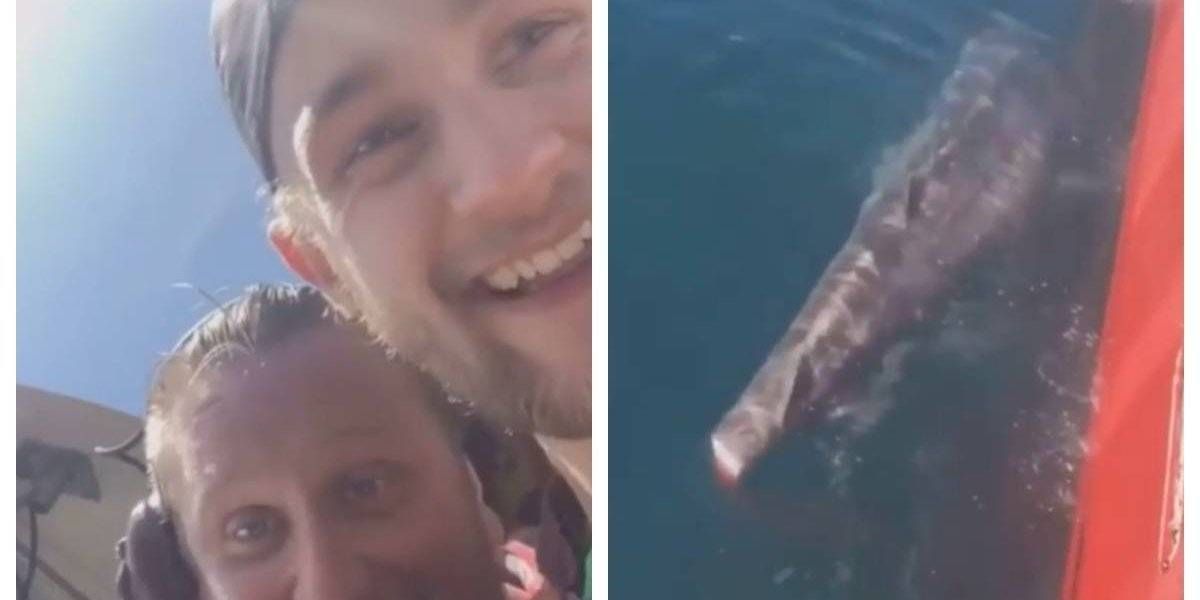 Crueldade: Pescadores decepam cauda de tubarão e deixam animal morrer em alto mar