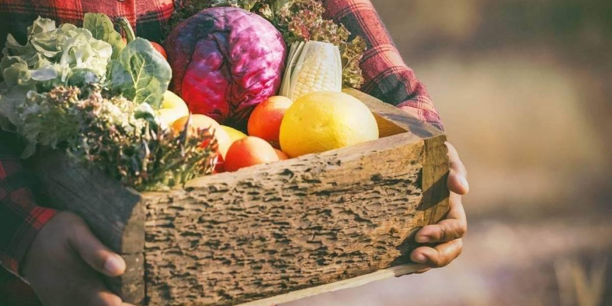 Como montar cardápio semanal saudável com alimentos coringas