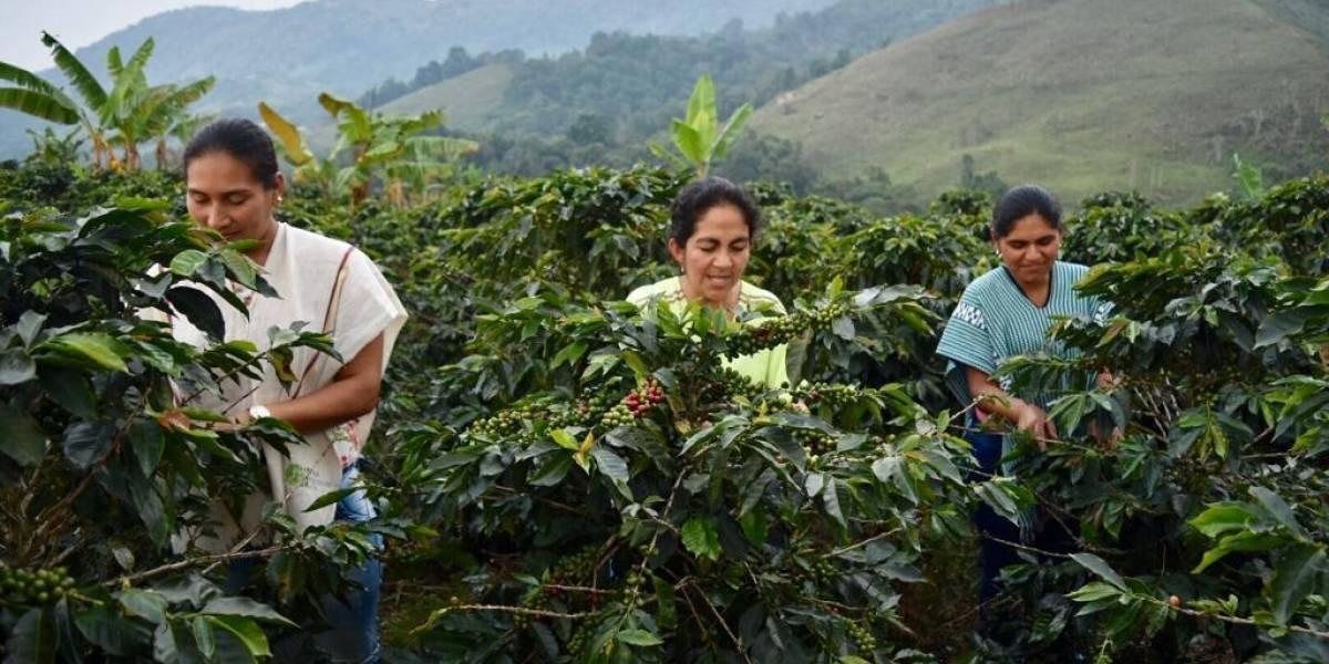 Excombatientes entregaron las primeras 22 toneladas de café orgánico cultivadas para su exportación