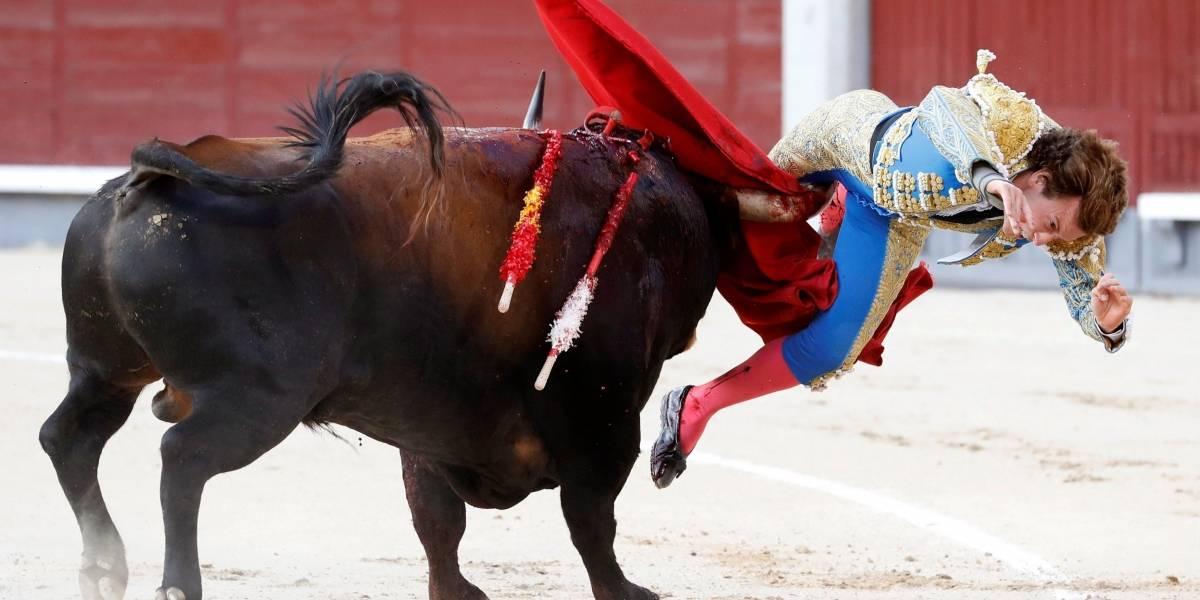 Antes de la estocada final, toro clavó los cuernos en la pierna del torero