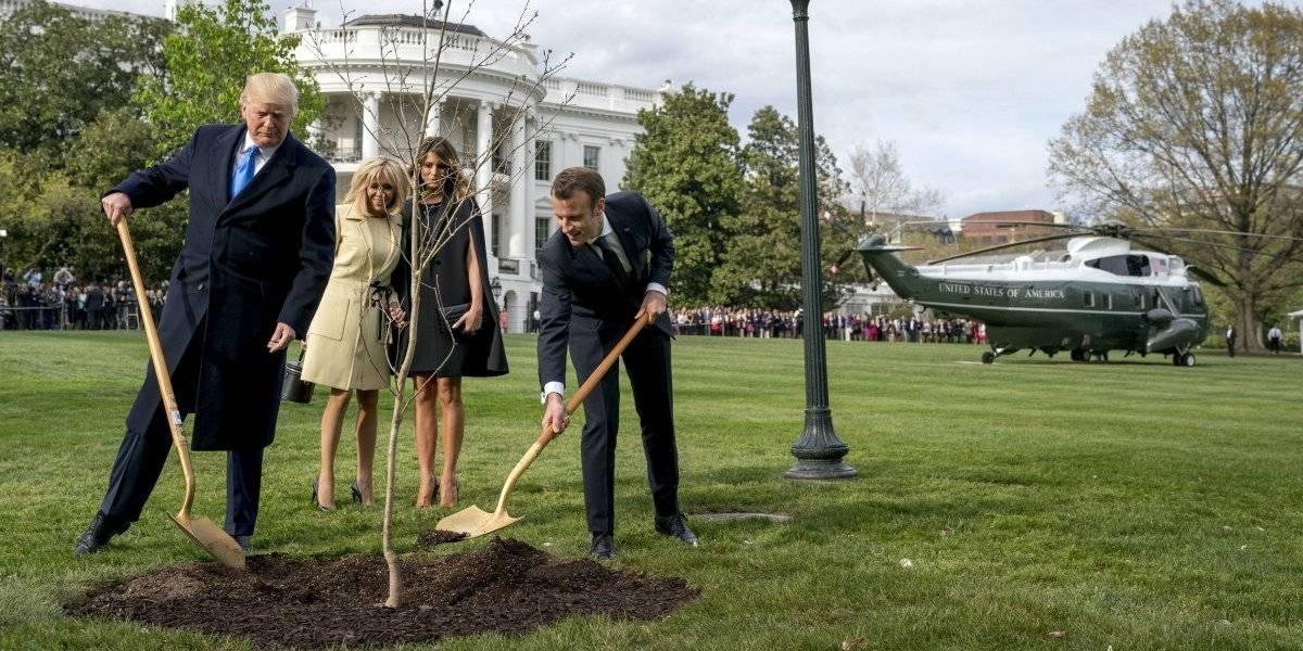 """Todo se derrumbó: muere """"árbol de la amistad"""" plantado por Trump y Macron en la Casa Blanca"""