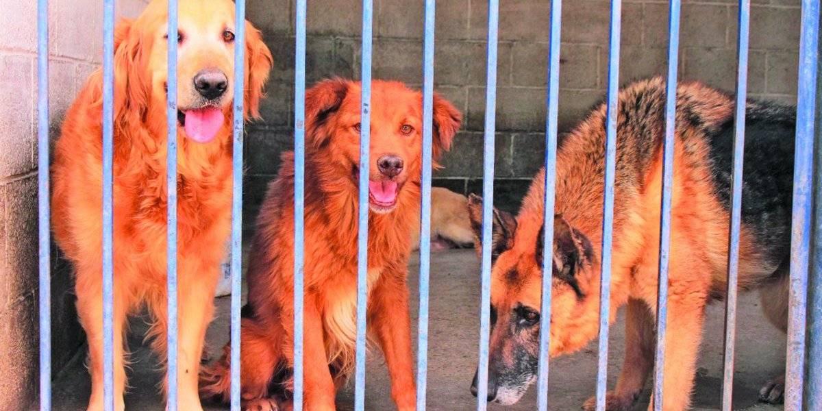 En riesgo de colapso la Brigada Animal por omisión de alcaldías