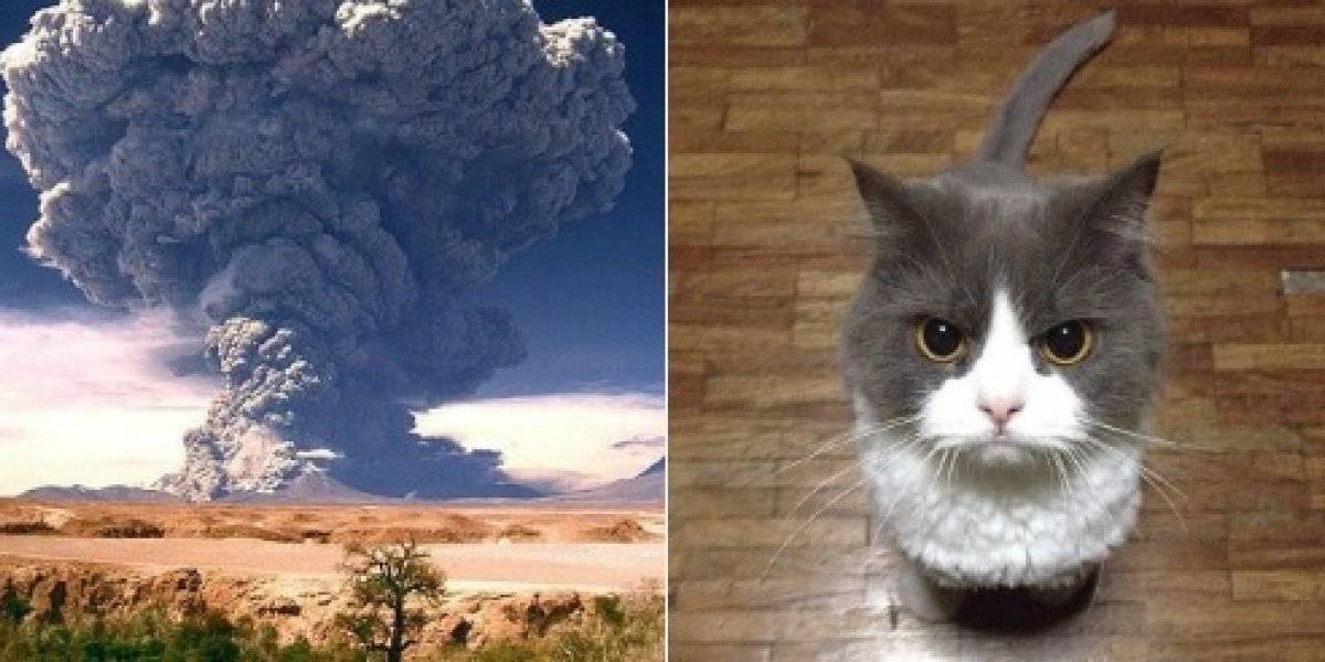"""""""Volcanes chilenos como gatos"""": geofísico usó felinos para explicar las características de los volcanes chilenos y enamoró a todos en las redes sociales"""
