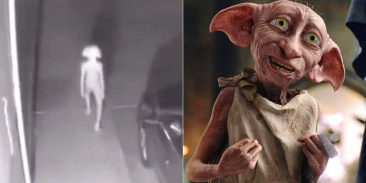 Dobby? Estranha criatura é gravada por câmera de segurança e fãs de Harry Potter a comparam com elfo doméstico