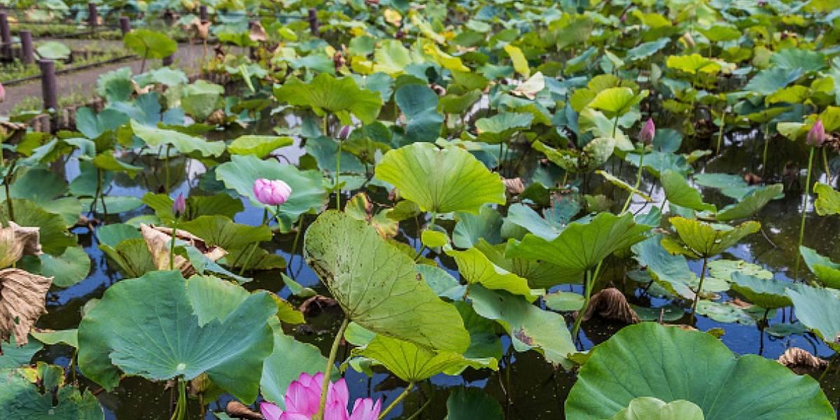 Un estudio reveló la extinción 600 especies de plantas