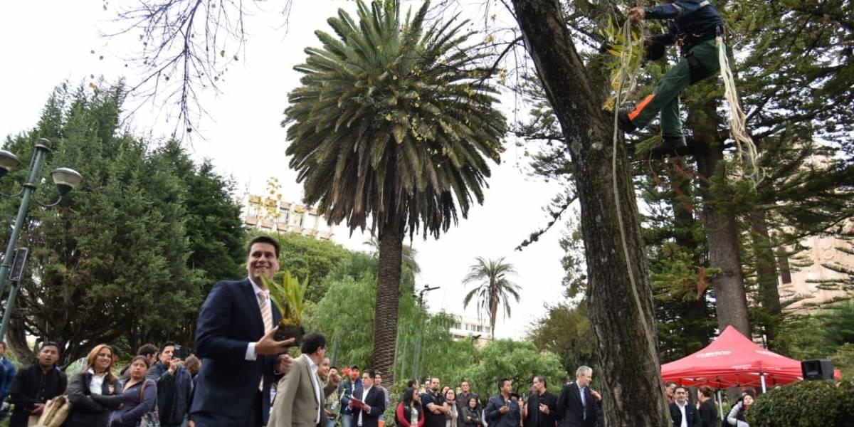 Orquídeas adornan el centro de Cuenca