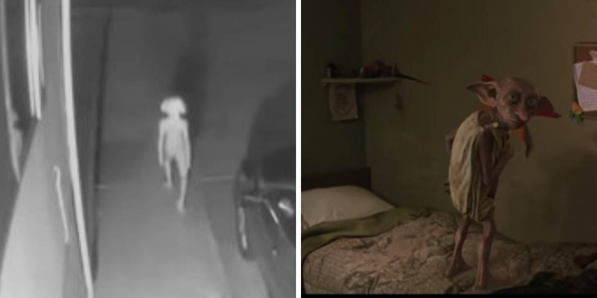 Video: captan a una extraña criatura idéntica a Dobby, el elfo de Harry Potter