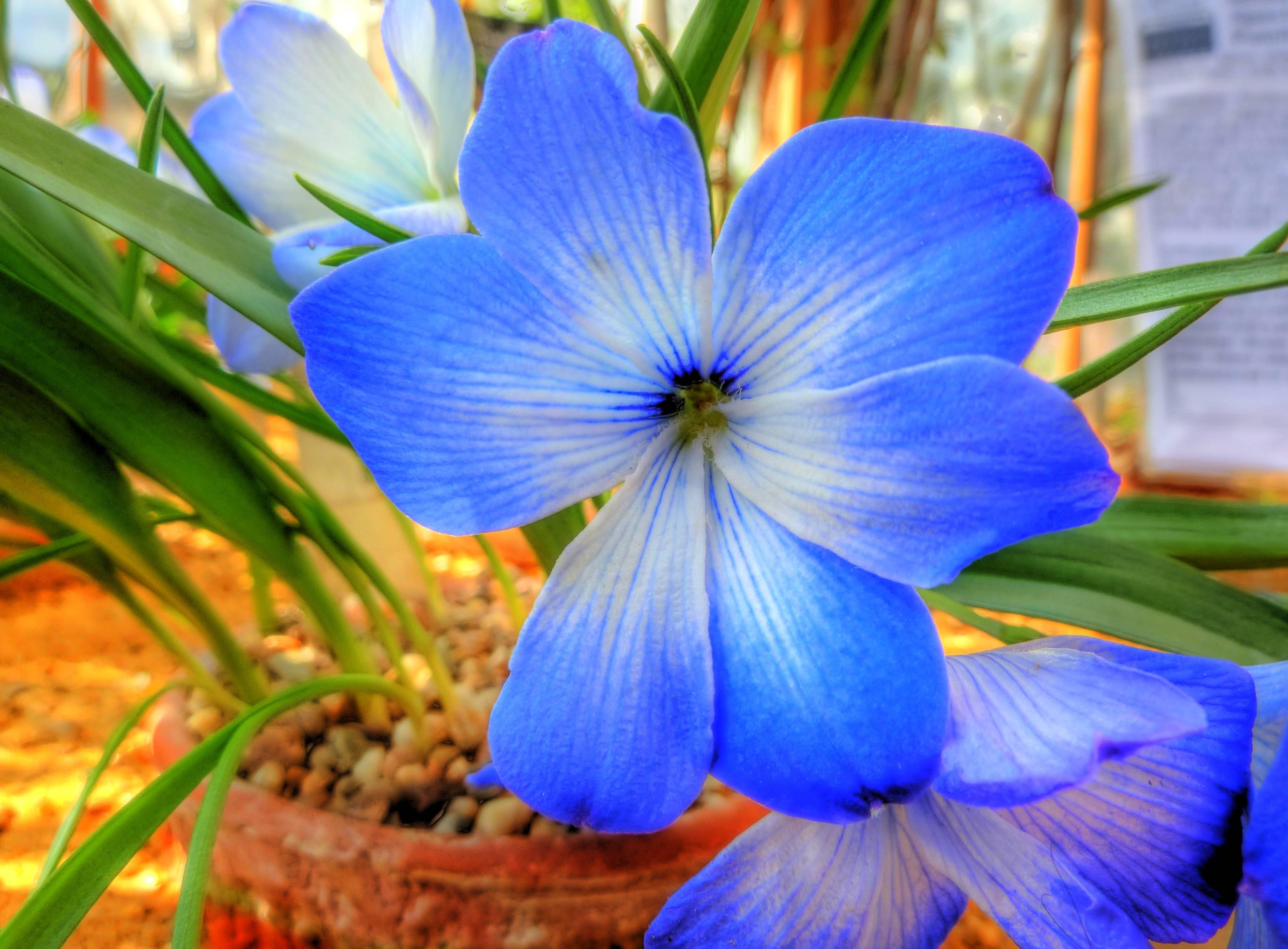 Preocupante: Las plantas también están sufriendo una extinción masiva de especies