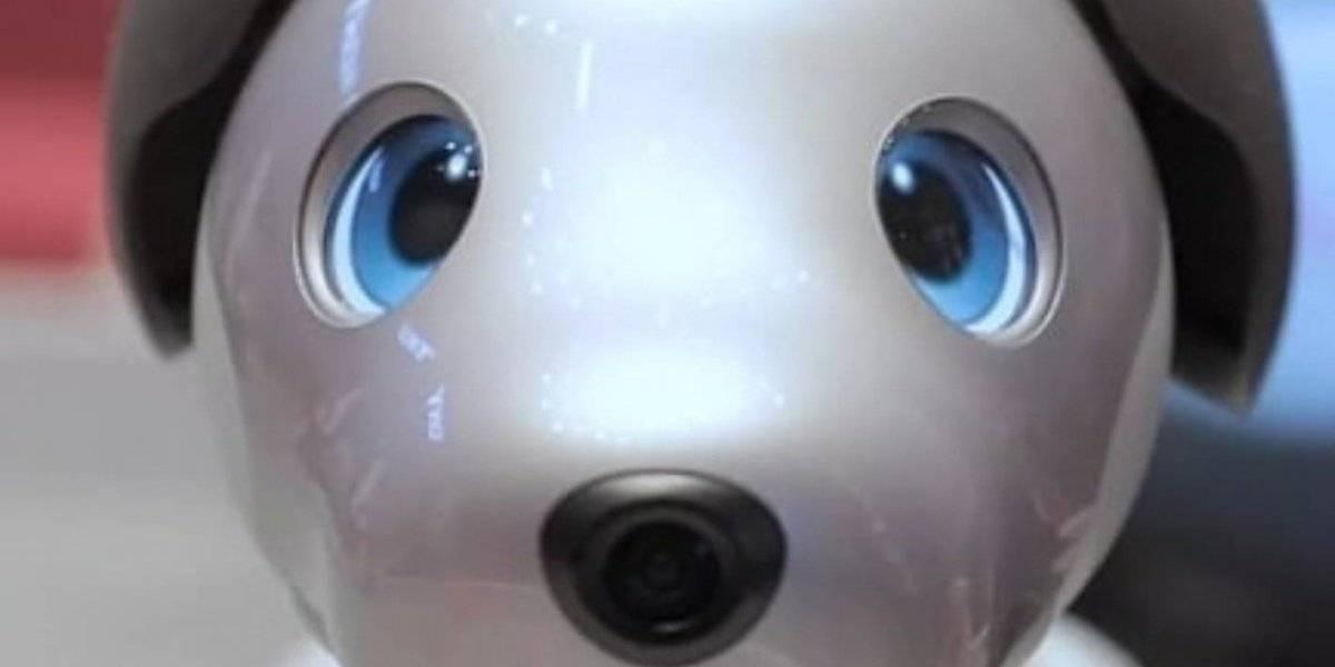 Agencia en Puerto Rico estrena robot mascota con inteligencia artificial