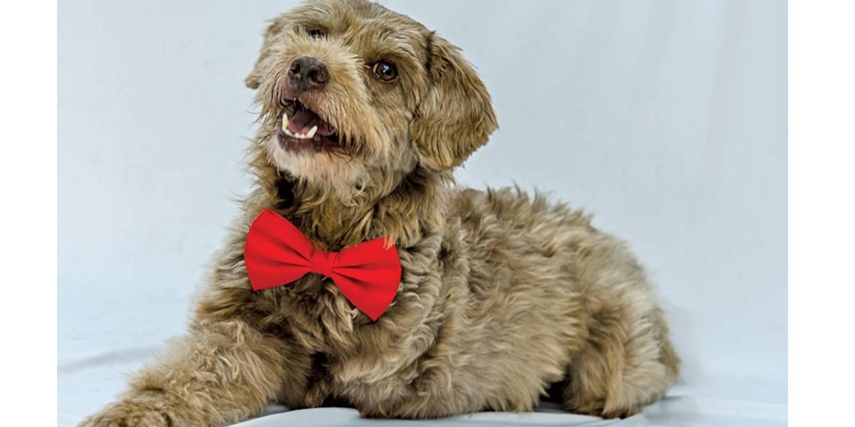 Adota SP busca tutores para cães e gatos