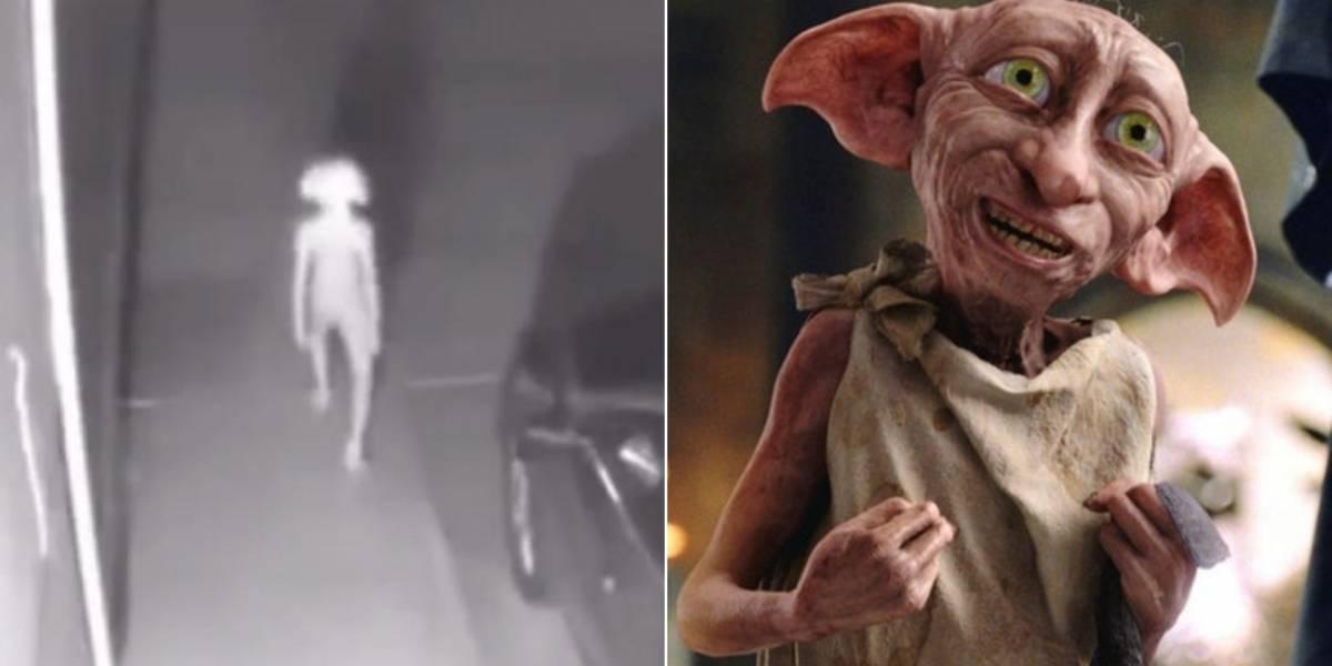É você, Dobby? Especialistas desvendam vídeo que capturou criatura estranha com teoria bizarra