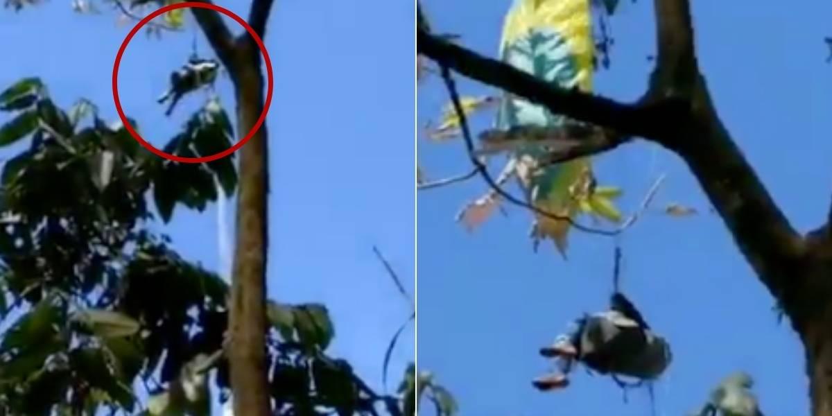Parapentista se salvó de morir al quedar atrapado en un árbol a 40 metros de altura