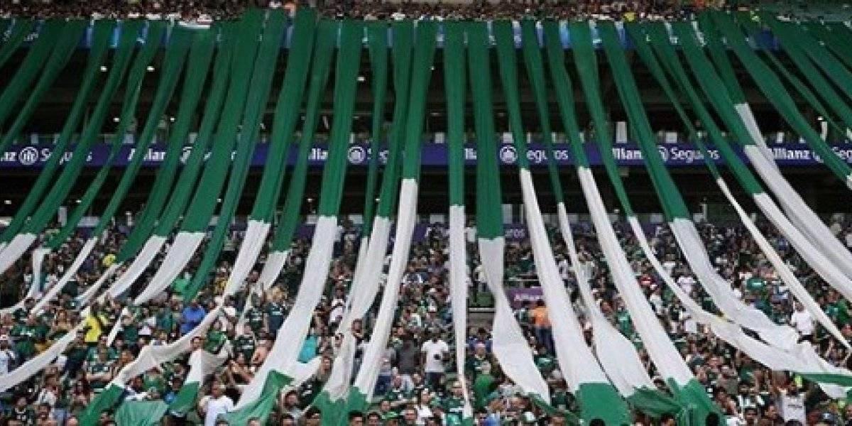 Campeonato Brasileiro 2019: como assistir ao vivo online ao jogo Palmeiras x Avaí